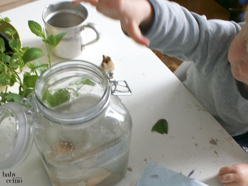 bootimglas-miniaquarium-10